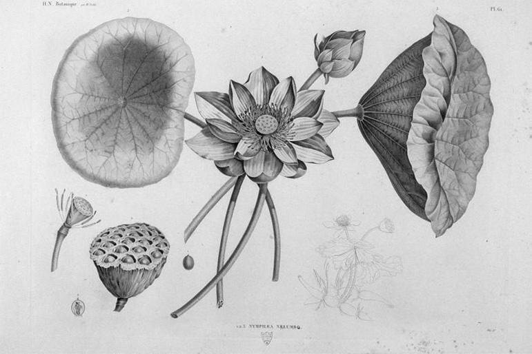 Symbole et gravure de la fleur de lotus pour la Twist, la bague réversible et personnalisable de BusBy Jewelry