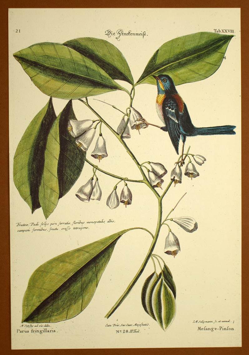 Symbole et gravure de l'oiseau pour la Twist, la bague réversible et personnalisable de BusBy Jewelry