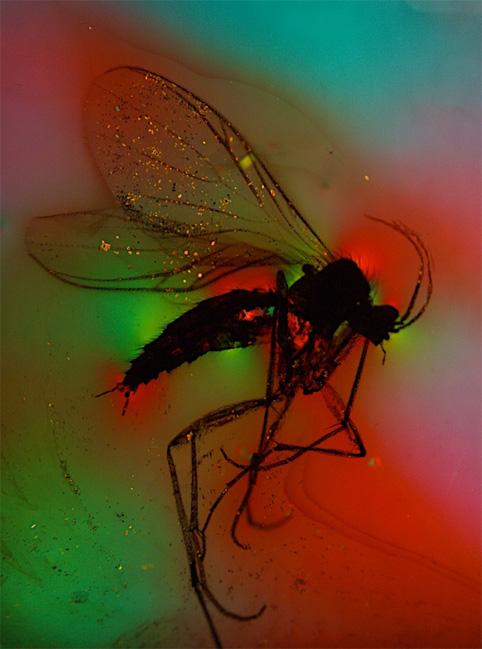 insecte prisonnier dans de l'ambre